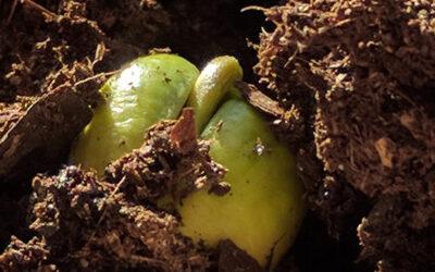 Unterschätze niemals die Kraft eines winzigen Samenkorns