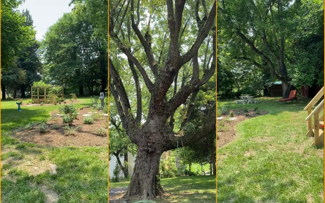 Planting for an inner and outer transformation