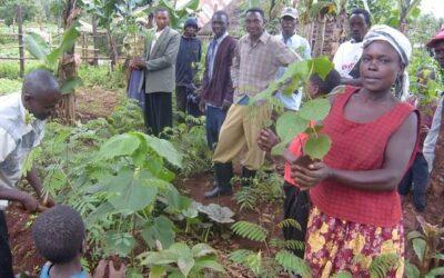 20,000 Trees planted in Kenya!