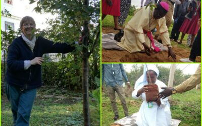 Two Sisters, Two Continents, and the Global Tree Initiative